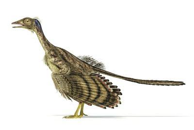 Archaeopteryx Dinosaur, Artwork--Stretched Canvas Print