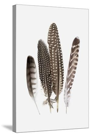 Feathers II-PI Studio-Stretched Canvas Print