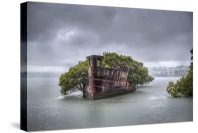 An Abandoned Steamship Sitting in Homebush Bay with Coastal Trees Growing in the Hull-Doug Gimesy-Stretched Canvas Print