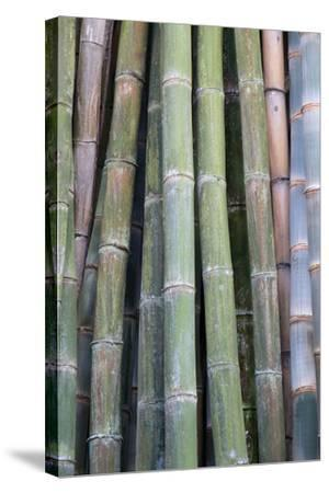 Bamboo Fence-Ramona Murdock-Stretched Canvas Print