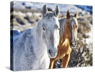 Horse Fort Ranch 6-Chris Dunker-Stretched Canvas Print