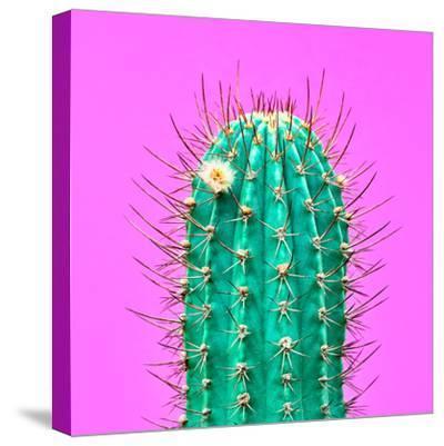 Cactus - Neon Pink Minimal Stillife-Indigo Photo Club-Stretched Canvas Print