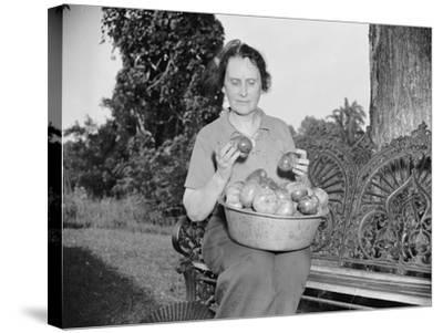 Director of the Mint Nellie Tayloe Ross relaxes on her Maryland farm, 1938-Harris & Ewing-Stretched Canvas Print
