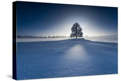 Single Broad-Leaved Tree in Winter Scenery in the Back Light, Triebtal, Vogtland, Saxony, Germany-Falk Hermann-Stretched Canvas Print