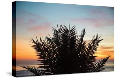 Sunset Palms II-Laura Marshall-Stretched Canvas Print