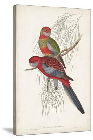 Tropical Parrots III-John Gould-Stretched Canvas Print