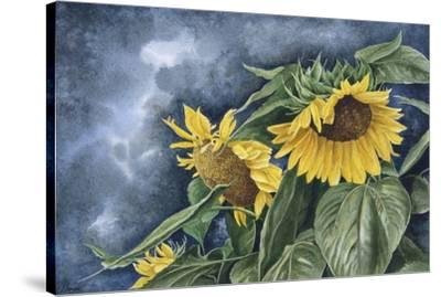 Summer Gold-John Morrow-Stretched Canvas Print