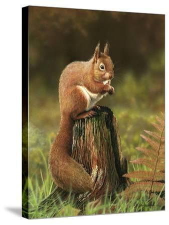 Red Squirrel 5753-Nigel Artingstall-Stretched Canvas Print