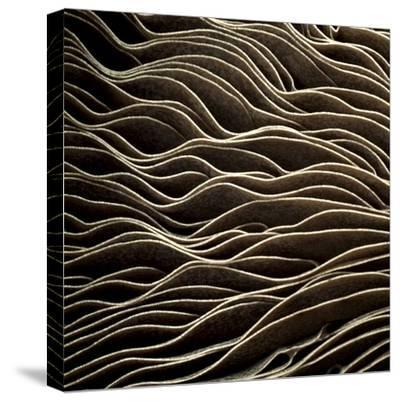 Detail of Mushroom-Tom Quartermaine-Stretched Canvas Print
