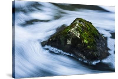Moss Covered Rock Slow Swirling Water-Anthony Paladino-Stretched Canvas Print