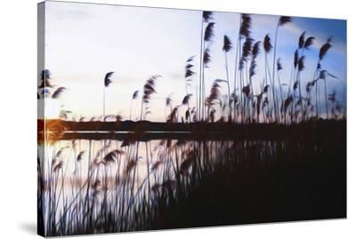 Digital art phragmites in blue sky sunset-Anthony Paladino-Stretched Canvas Print