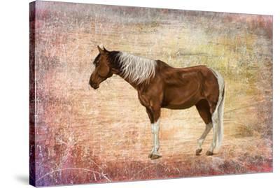 Horse Image-Ata Alishahi-Stretched Canvas Print