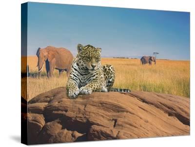 Leopard-Ata Alishahi-Stretched Canvas Print