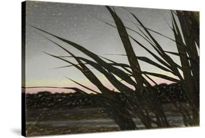Liquid Pencil Drawing Giant Reeds After Sunset-Anthony Paladino-Stretched Canvas Print