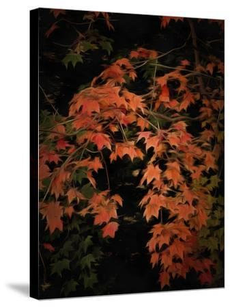 Fall Colours 2-Dorothy Berry-Lound-Stretched Canvas Print