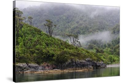 Chile, Patagonia, Lake District, Pumalin National Park. Valdivian rainforest-Fredrik Norrsell-Stretched Canvas Print