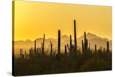 USA, Arizona, Saguaro National Park. Sonoran Desert at sunset.-Jaynes Gallery-Stretched Canvas Print
