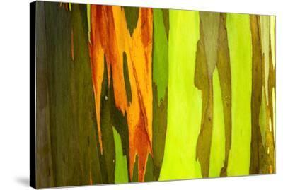 Rainbow Eucalyptus bark, Mindanao Gum, Island of Kauai, Hawaii, USA-Russ Bishop-Stretched Canvas Print