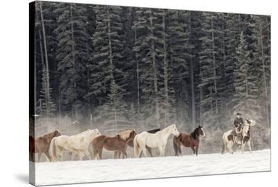 Horse roundup in winter, Kalispell, Montana.-Adam Jones-Stretched Canvas Print