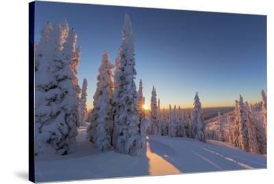 Setting sun through forest of snow ghosts at Whitefish, Montana, USA-Chuck Haney-Stretched Canvas Print