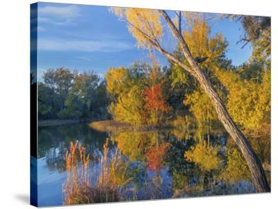 Inks Lake, Inks Lake State Park, Texas.-Tim Fitzharris-Stretched Canvas Print