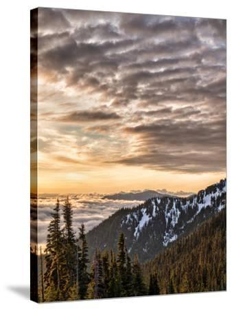 USA, Washington State, Olympic National Park, View towards Hurricane Ridge-Ann Collins-Stretched Canvas Print