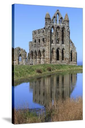 England, North Yorkshire, Whitby. Ruins of Whitby Abbey-Emily Wilson-Stretched Canvas Print
