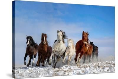 Mongolia Horses-Libby Zhang-Stretched Canvas Print
