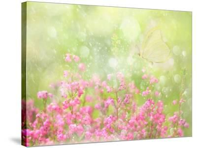 It's a Beautiful Day-Delphine Devos-Stretched Canvas Print