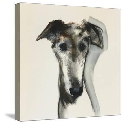Galgo Espanol-Sally Muir-Stretched Canvas Print