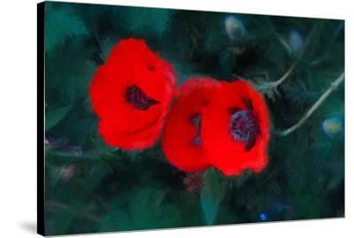 Three Poppies of Scarlet-Helen White-Stretched Canvas Print