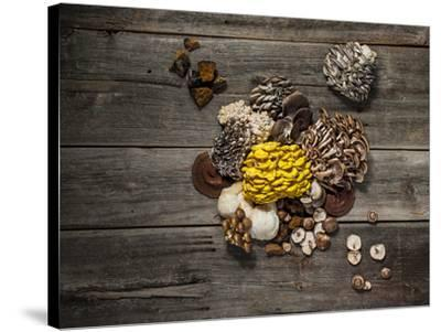 An assortment of popular mushrooms.-Rebecca Hale-Stretched Canvas Print