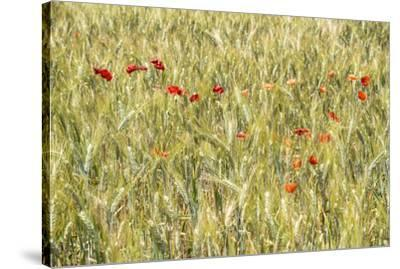 France Provence Collection - Wheat Field-Philippe Hugonnard-Stretched Canvas Print