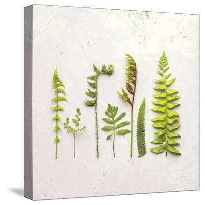 Flat Lay Ferns IV-Felicity Bradley-Stretched Canvas Print