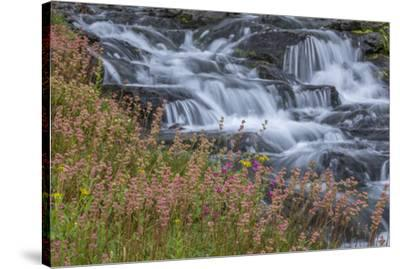 Canada, British Columbia, Selkirk Mountains. Leatherleaf saxifrage flowers and cascading stream.-Jaynes Gallery-Stretched Canvas Print