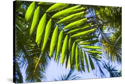 U.S. Virgin Islands, St. Thomas. St. Peter, tropical vegetation-Walter Bibikow-Stretched Canvas Print