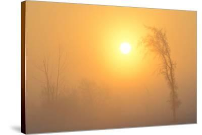 Canada, Manitoba, Winnipeg. Trees in fog at sunrise.-Jaynes Gallery-Stretched Canvas Print