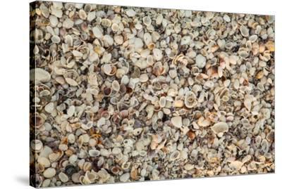 Shell pattern on beach, Boca Grande, Florida.-Adam Jones-Stretched Canvas Print