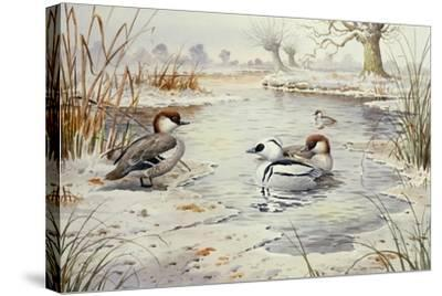 Smew-Carl Donner-Stretched Canvas Print