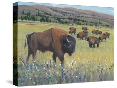 Animals of the West I-Tim O'Toole-Stretched Canvas Print