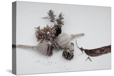 Fleurs de pavot séchées.-Angela Marsh-Stretched Canvas Print