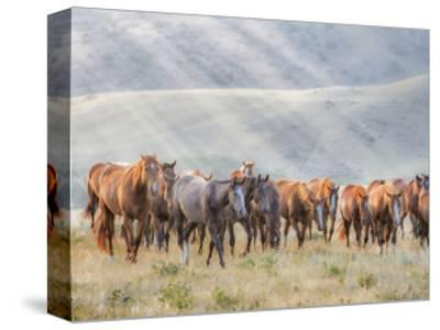 Sunkissed Horses III-PHBurchett-Stretched Canvas Print