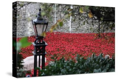 'Blood Swept Lands and Seas of Red', Tower of London, 2014-Sheldon Marshall-Stretched Canvas Print
