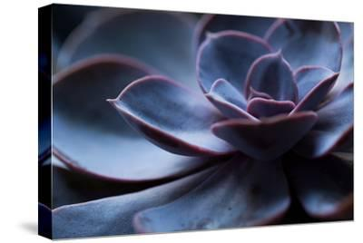 Succulent Plant in Close-up-Paivi Vikstrom-Stretched Canvas Print