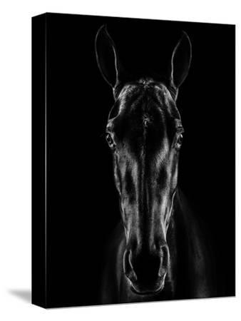 The Horse in Noir-Jackson Carvalho-Stretched Canvas Print