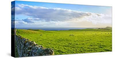 Stone fence along pasture with Sheep grazing, Moray Firth near Brora, Scotland-Panoramic Images-Stretched Canvas Print