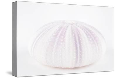 So Pure Collection - Natural Mauve Sea Urchin Shell-Philippe Hugonnard-Stretched Canvas Print