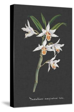 Orchid on Slate IV-Vision Studio-Stretched Canvas Print