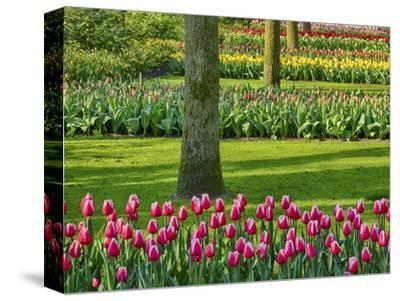 Netherlands. Spring, flowering colorful assorted flowers-Terry Eggers-Stretched Canvas Print