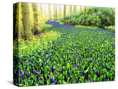 Netherlands, Lisse. Multicolored flowers blooming in spring.-Terry Eggers-Stretched Canvas Print